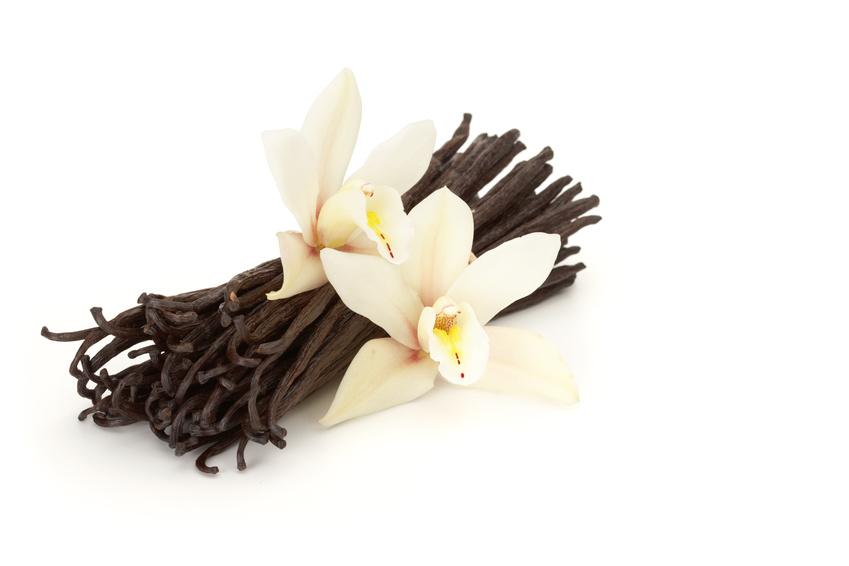 3 Homemade Lotion Recipes - Whipped Vanilla Lotion